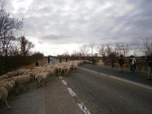 cruzando-la-carretera